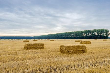 Stoppelfeld mit einigen Strohballen im Vordergrund am Ende des sonnigen Tag in der niederländischen Sommersaison. Lizenzfreie Bilder