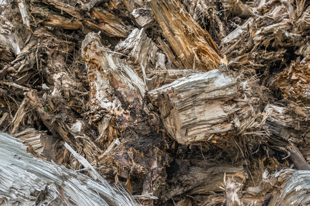 Closeup of stacked dry tree stumps in a large heap.