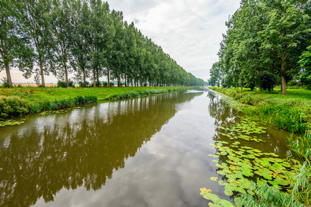 Rows of trees on the banks of a straight Dutch canal in the summer season. In the foreground water lily leaves floating on the water.