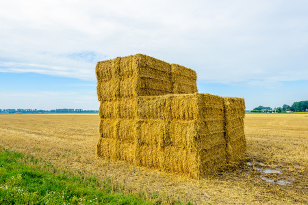 Stacked straw bales in front of a large stubble field in the morning of nice day in the Dutch summer season. Lizenzfreie Bilder
