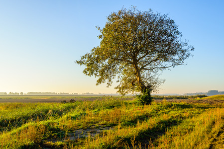 Picturesque rural landscape in the fall season with a solitary tree in setting sunlight.