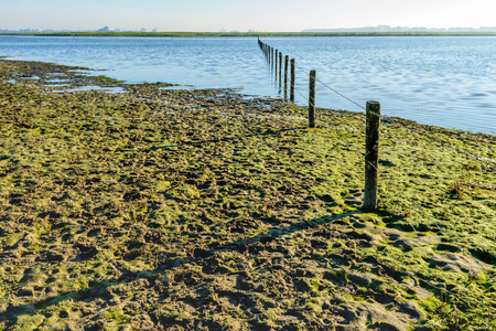 Fence of wooden poles and barbed wire in a flooded Dutch nature reserve early in the morning of a sunny day in the fall season.