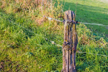 Unprofessional installed electric fence and a weathered wooden pole at the edge of a meadow. Stock Photo