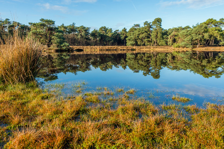 Scots pine trees reflecting in the mirror-smooth surface of a fen in a Dutch nature on a sunny day in the fall season. Lizenzfreie Bilder