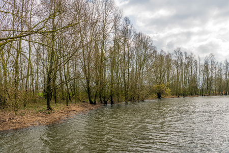 Row of fragile budding shrubs and trees on the bank of a creek in a Dutch national park. The sky is cloudy but the spring season has just begun. Stock Photo