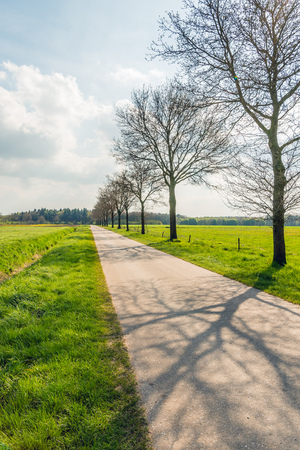 seemingly: Backlit image with a row of bare trees and a long seemingly endless straight road in typical Dutch agricultural landscape.