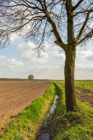 Plowed field next to a curved ditch in the beginning of the Dutch spring season. In the foreground is a just budding tree.