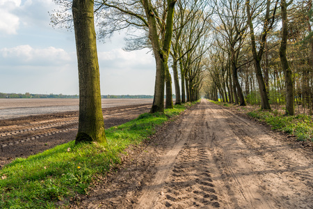 suelo arenoso: Seemingly endless dirt road with tire tracks and rows of just budding trees on both sides. It is springtime in the Netherlands now.