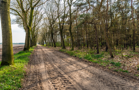 seemingly: Seemingly endless dirt road with tire tracks and rows of just budding trees on both sides. It is springtime in the Netherlands now.