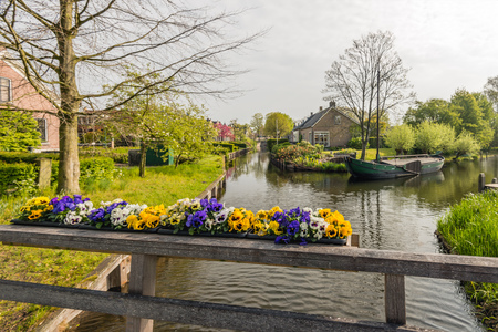 violas: Bright blooming violas on a wooden bridge railing in the foreground of a canal in the Dutch village of Drimmelen.