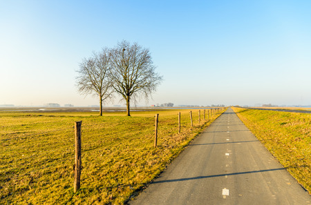 end of a long day: Long straight bike path next to a fence with wooden poles and barbed wire in a Dutch polder landscape. It is a sunny day in the end of the winter season. The grass is yellowed.