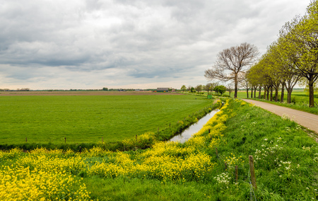 Dutch rural landscape with fresh green grass and yellow flowering rapeseed on a cloudy day in the spring season. Stock Photo