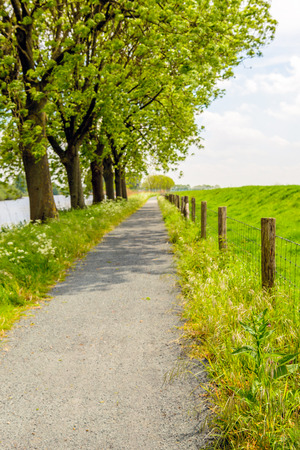 Seemingly endless path next to a row of trees and a fence made from gauze and wooden poles.