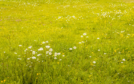 Flowering wild plants and grasses in a nature reserve on a sunny day in the spring season. Stock Photo