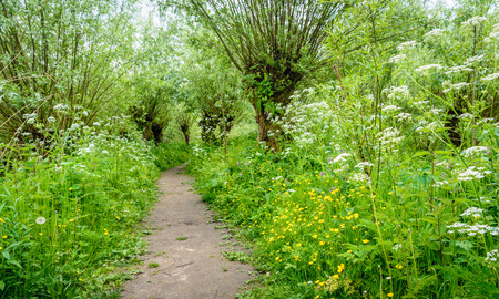 Idyllic path between budding willow trees with fresh young leaves. Its springtime, it smells spicy and the colorful wild plants bloom exuberantly. Lizenzfreie Bilder