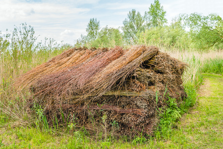 Big heap with bundled willow branches in a Dutch nature reserve on a cloudy in the spring season.