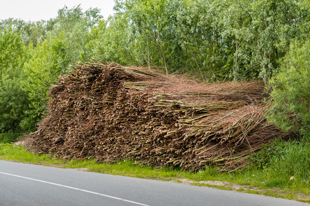 Tied bundles of osiers waiting for transport in the roadside of a country road along a Dutch nature reserve