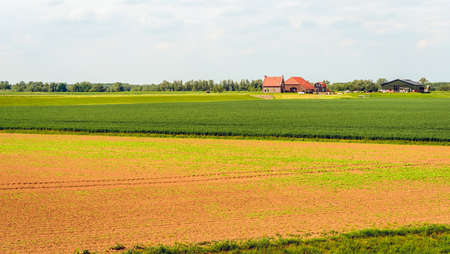 Farm on an artificial dwelling mound in a newly constructed polder in the Netherlands.