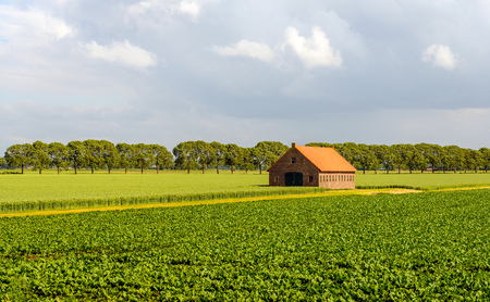Rural landscape with cultivation of sugar beets and wheat and in the background a barn with a striking orange tiled roof. Its cloudy but still sunny at the end of a lovely spring day. Lizenzfreie Bilder