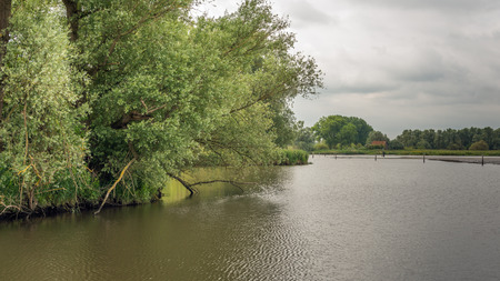 Overhanging willow trees in a wild freshwater tidal area in the Netherlands. It is low tide on a cloudy day in the spring season. Lizenzfreie Bilder