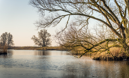 Pamoramic image of a bare tree with irregular branches at the edge of the water in a Dutch nature reserve. It is a the end of the winter season. A thin layer of ice is on the water sureface.