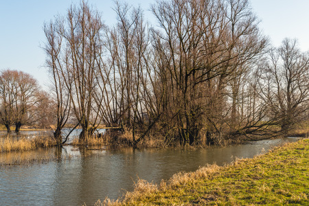 Picturesque landscape of a flooded area with bare trees and shrubs on a sunny day in the Dutch winter season.