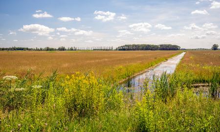 Bloeiende wilde planten en riet aan de rand van een lange sloot in een nederlands natuurreservaat. Het is een zonnige dag in het zomerseizoen. Stockfoto