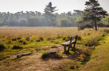 Leere Holzbank am Rand eines malerischen Moorlandes mit blühender Heide. Es ist früh am Morgen eines sonnigen Tages am Ende der holländischen Sommersaison.