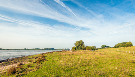 Floodplain of a wide Dutch river early in the morning of a sunny day in the beginning of the fall season. In the background a flock of sheep is visible in the grass. Lizenzfreie Bilder