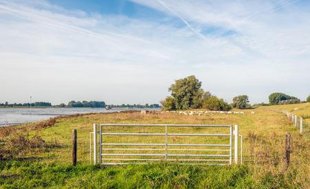 Eisentor in einem Zaun auf den Floodplains eines breiten holländischen Flusses früh morgens eines sonnigen Tages am Anfang der Herbstsaison. Im Hintergrund ist eine Schafherde im Gras zu sehen.
