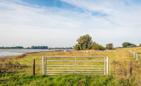 galvanized: Iron gate in a fence on the floodplains of a wide Dutch river early in the morning of a sunny day in the beginning of the fall season. In the background a flock of sheep is visible in the grass. Stock Photo