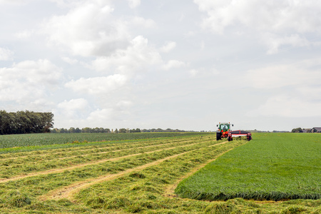 Mechanized grass cutting and merging for silage storage purposes.