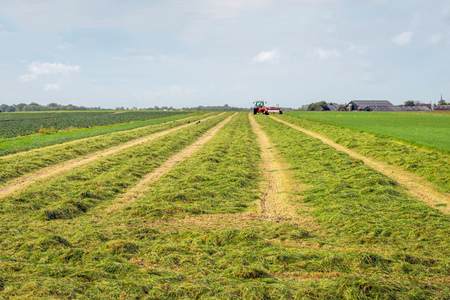 Mechanized cut and merged grass for silage storage purposes. The focus of hte image is in the foreground; blurred in the background the cutting and merging machine is still at work.