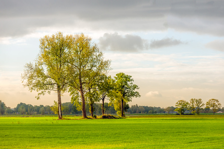 Row of trees in early morning sunlight. It is in the beginning of the fall season and the colors of the leaves are changing already. Lizenzfreie Bilder