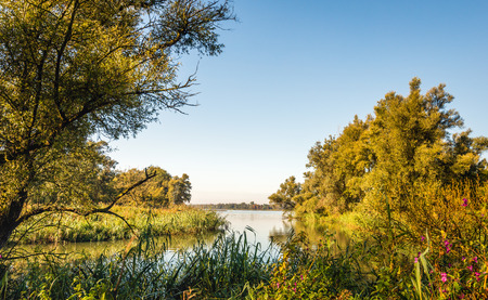 River view between trees and shrubs in autumn colors. Its is early in the morning of a sunny day in a Dutch nature reserve.