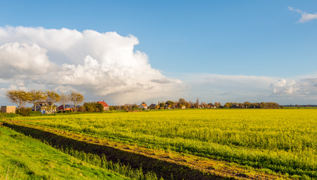 Dutch rural landscape with yellow blooming rapeseed in the foreground and a row of houses and farms at an embankment in the background. It is a sunny day in autumn. Stock Photo