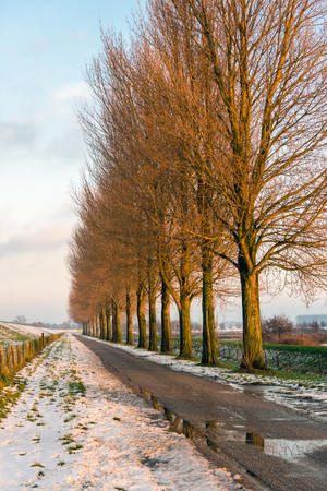 Row of tall bare trees beside a Dutch country road in wintertime. There is still snow in the roadside. It is almost sunset.