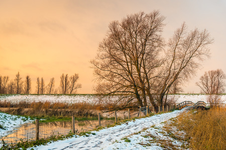 Atmospheric winter landscape at the end of a sunny day in the Dutch winter season. In the background are a tall bare tree against a golden sky and small wooden bridge over the water.