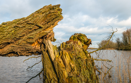 Closeup of a broken thick tree in the foreground of a small lake. The tree was already rotten and was broken down by the strong wind. Stock Photo