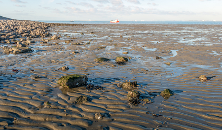 Close-up of the Oosterschelde beach near the Zeeland village of Wemeldinge on the former island of Zuid-Beveland. The photo was taken during low tide on a sunny winter day.