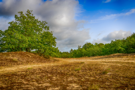 Image in dramatized colors of a hilly Dutch landscape with sand here en there overgrown with moss and with trees in the background. It is a hot and sunny day in the summer. It's quiet and deserted now.