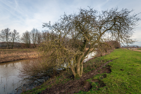 Tree with a tangle of bare branches on the bank of the narrow Dutch river Donge near the city of Oosterhout, North Brabant. It is at the end of a day in the winter season.