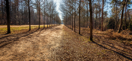 Seemingly endless path in a Dutch forest. This panoramic photo was taken in the Mastbos near the city of Breda, North Brabant, on a sunny day in the winter season.