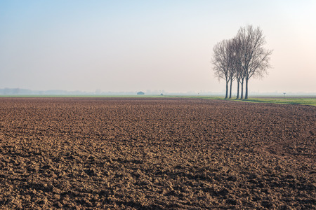 Five tall bare trees in a row next to a plowed field in a Dutch polder landscape. Spring has just begun.