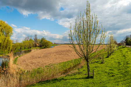 Picturesque rural Dutch landscape in springtime. In the foreground is a row of blossoming apple treesand in the background is a large field just plowed and cultivated.