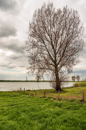 Tall tree just budding on the flood plain of the Dutch river Bergsche Maas near the village of Dussen, North Brabant. It is a cloudy in the spring season. Stock Photo