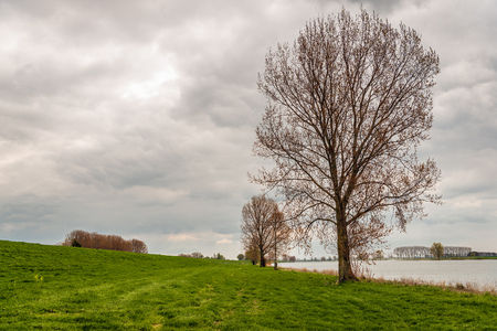 Tall trees just budding on the flood plain of the Dutch river Bergsche Maas near the village of Dussen, North Brabant. It is a cloudy in the spring season.