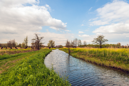 Natural stream in a rural Dutch landscape. The blue sky is reflected in the rippling water surface. It is springtime now. Banco de Imagens