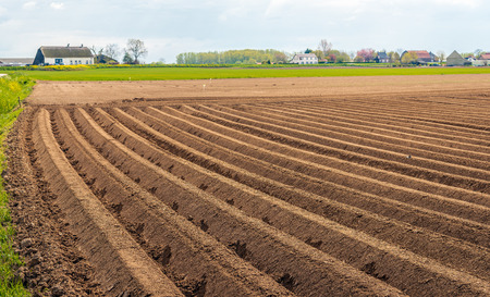 Dutch rural landscape with clay potato ridges in the foreground.  The seed potatoes have just been planted. The photo was taken in the beginning of the spring season near the village of Almkerk, North Brabant. Stockfoto
