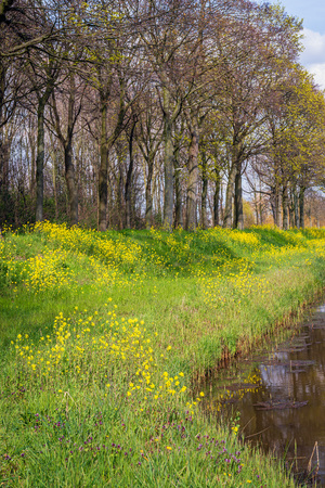 Yellow rapeseed and other herbs flowering on the slope of an Dutch dike next to a ditch in a polder on a sunny day at the beginning of the spring season. The photo was taken in the province of North Brabant.